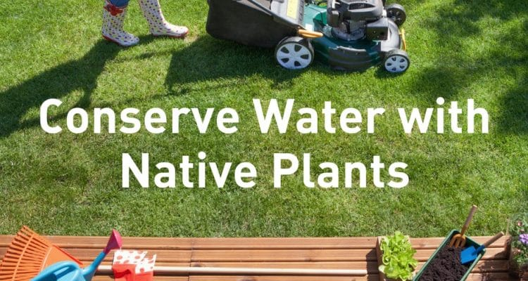 Conserve Water with Native Plants   WFAA   NTMWD