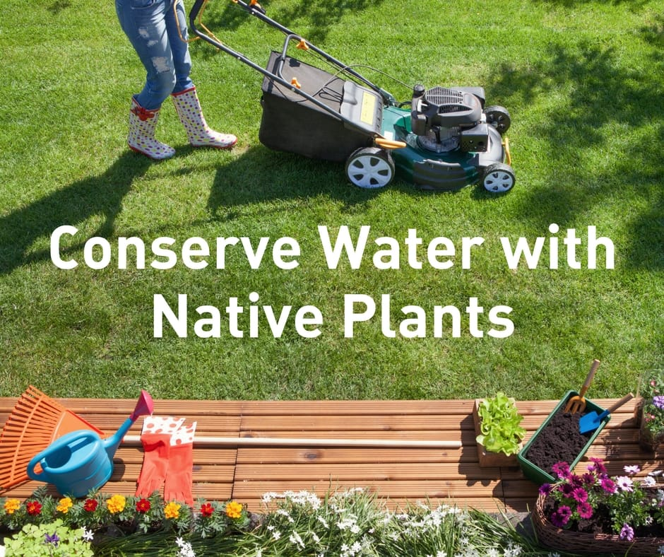 Conserve Water with Native Plants | WFAA | NTMWD
