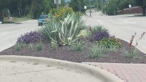 City of Allen | native landscaping | #PledgeToPlantSmart