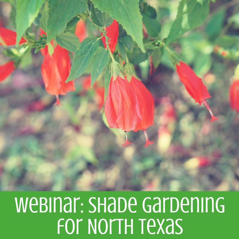 Webinar Shade Gardening North Texas Municipal Water District